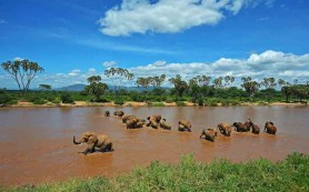 Elephants are pictured crossing the Ewaso Nyiro river in Samburu game reserve on May 8, 2013. UNEP goodwill ambassador and Chinese actress Li Bingbing was on an official visit in Kenya to highlight issues of Africa's poaching crisis. AFP PHOTO/Carl de Souza        (Photo credit should read CARL DE SOUZA/AFP/Getty Images)