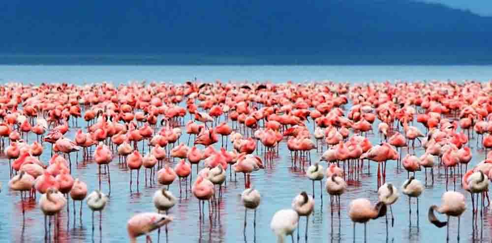 Lago Nakuru