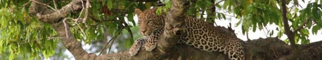 jumbo-safari_38