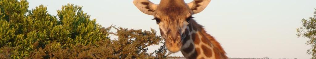 kudu-camp-tsavo-est_14