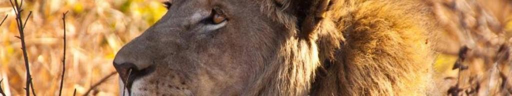 masai-mara-1_22