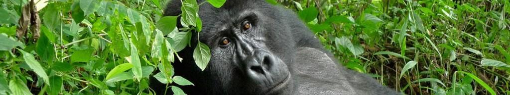 queen-elisabeth-e-bwindi-gorilla_3